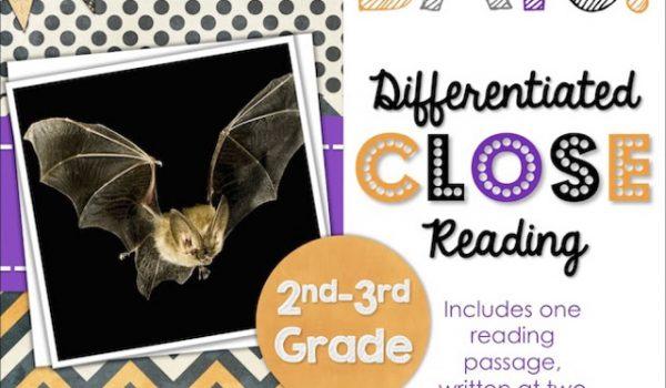 Bat videos and a bat FREEBIE!